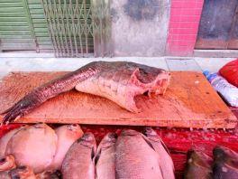 Fisch am Markt von Iquitos